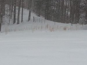 snow, picture by Lisa Binion