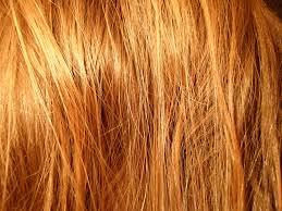 hair, wikimedia commons