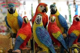 a company of parrots, wikimedia commons