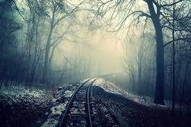 dark forest, www.pexels.com