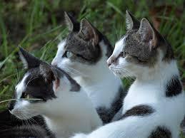 cats, pixabay