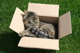cat in a box, flickr