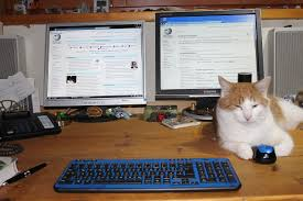 cat on computer desk thinking about next story, wikimedia commons