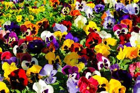 flowers, pixabay