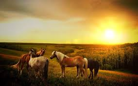 horses, pixabay