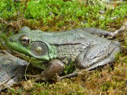 A Leap Of Frogs Ranidaphobia Lisa S Writopia