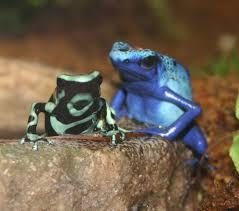 poison dart frogs at Maritime Aquarium, flickr