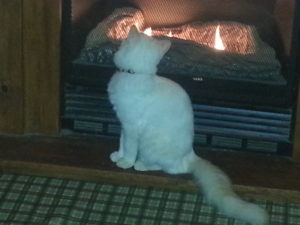 Loki gazing into fireplace, picture by Lisa Binion