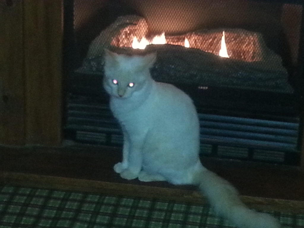 Loki in front of fireplace, picture by Lisa Binion
