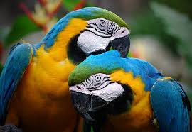 imagination, colorful parrot couple, flickr