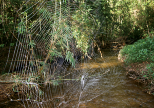 huge spider web, wikimedia commons